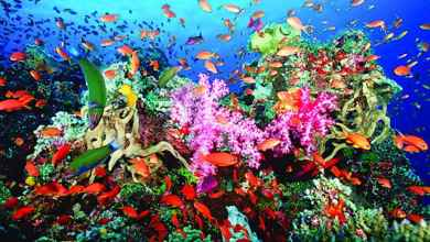 Photo of أجمل 4 محميات طبيعية في مصر