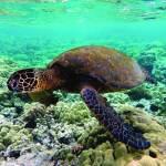 كيريباتي.. نييوي.. روتوروا.. وجهات سياحية جديدة
