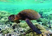 Photo of كيريباتي.. نييوي.. روتوروا.. وجهات سياحية جديدة