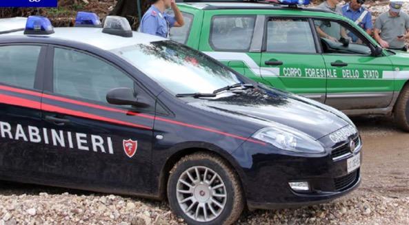 Un'operazione condotta da Carabinieri e Corpo Forestale