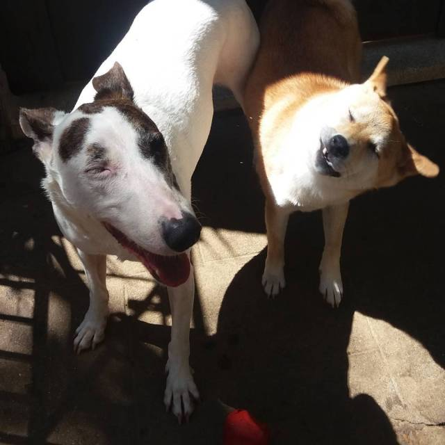 ossosdooficio crechedecaes hoteldecaes petdaycare pethotel daycare caes cachorro dog pethellip