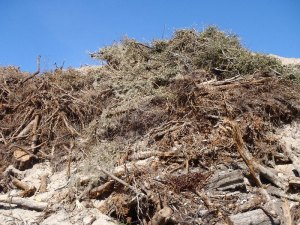 landscaping debris
