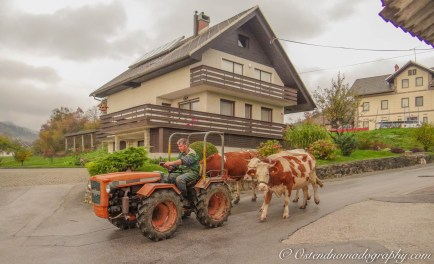 Life in Slovenia's countryside