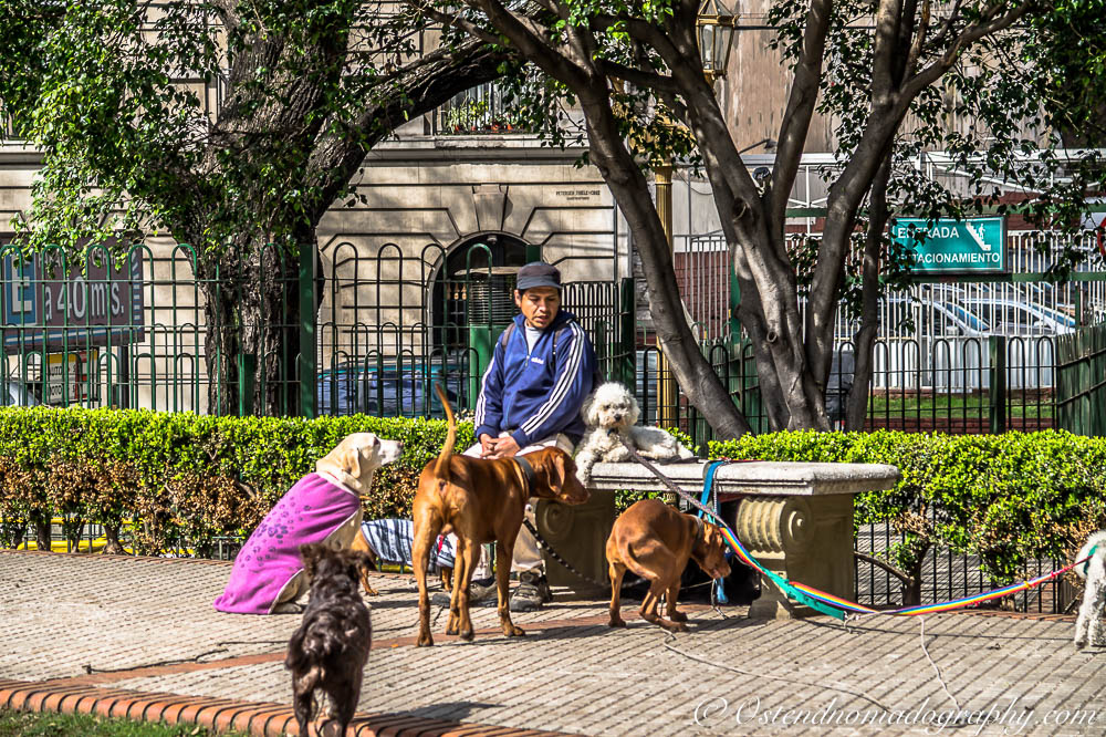 A Dog Sitter in Buenos Aires