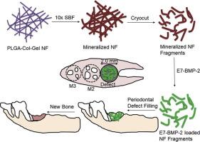 Bone Regeneration Article Image
