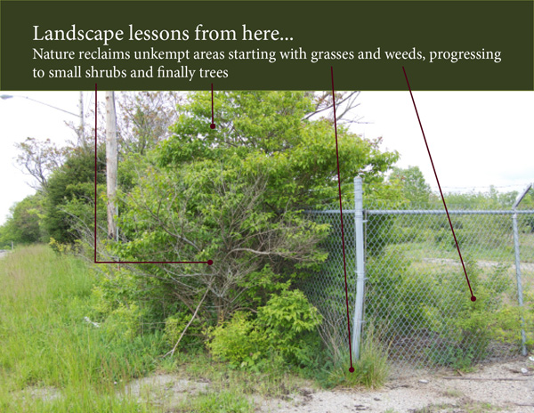 Nature will reclaim an unkempt area starting with grasses, then progressing to trees.