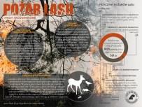 polska-grupa-infograficzna-pozary