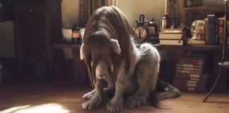 Netflix mostra novo trailer de Fullmetal Alchemist live-action