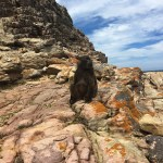 final_capepoint_baboon