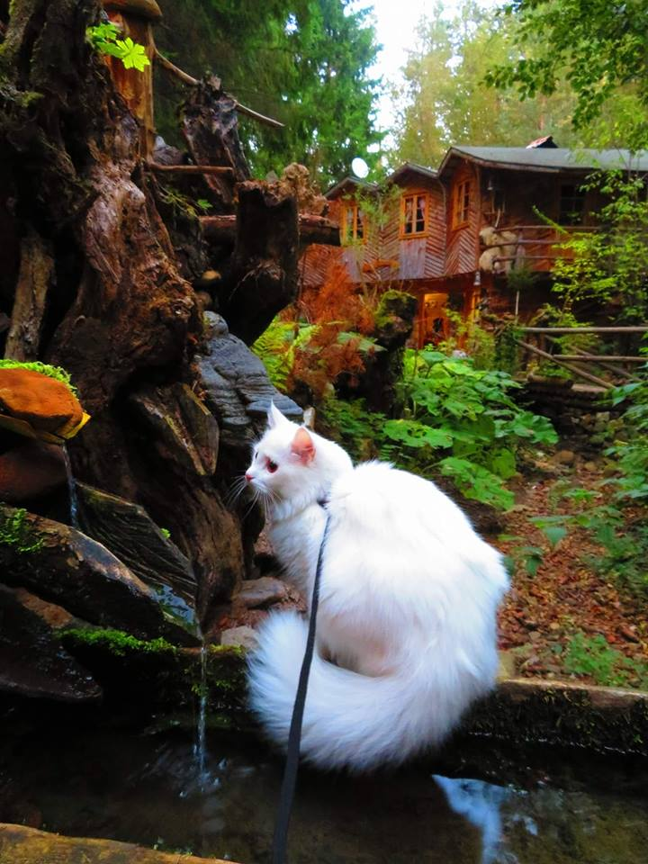 Комплекс Гераница - приказно красиво място в Родопите