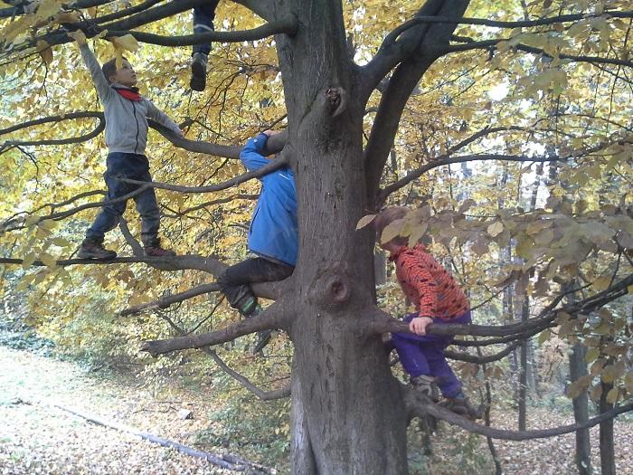 Bogato naravno okolje, nekaj orodja in družba različno starih otrok je dovolj, da otroci iz sebe potegnejo vse svoje potenciale