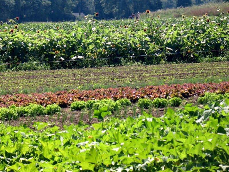 Boyce Field, part of the working farm.