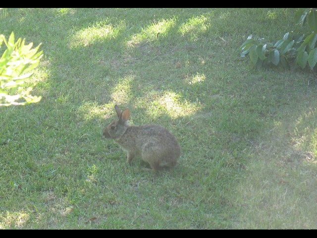 We saw many hares on our nature walk