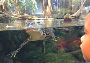Family Fun in Chattanooga, Tennessee including a visit to the Tennessee Aquarium.