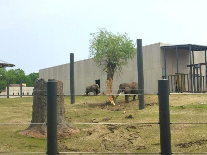 2 Reasons you Need to Go to Milwaukee County Zoo this Summer: Brick Dinos and the New Elephant Home