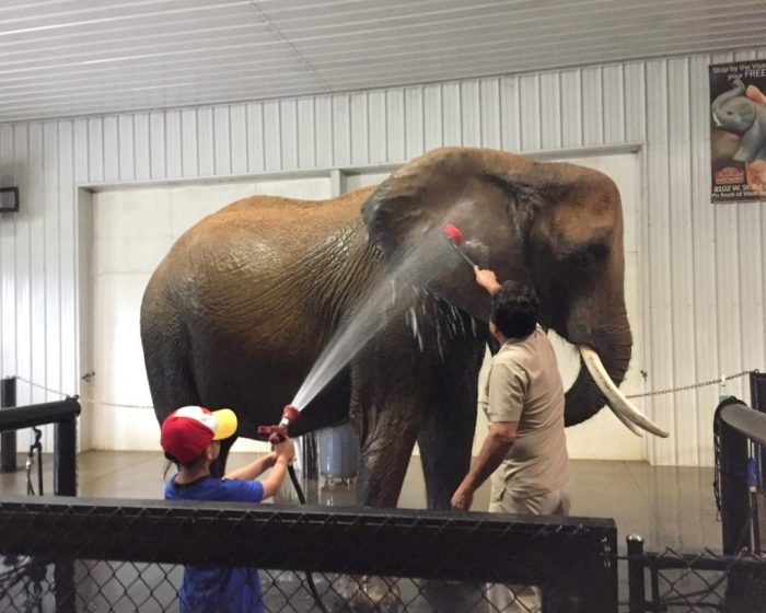 An unforgettable elephant spa encounter at Wilstem Ranch in Southern Indiana.