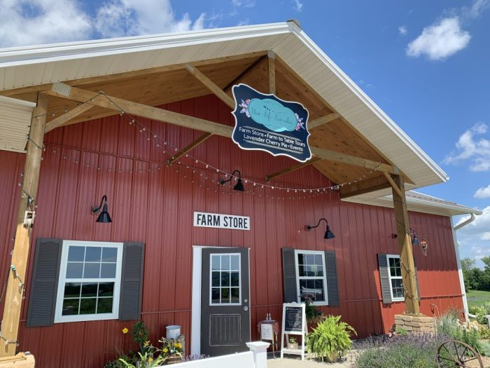 Check out these reasons why you'll want to visit New Life Lavender and Cherry Farm in Baraboo, Wisconsin just outside Wisconsin Dells.