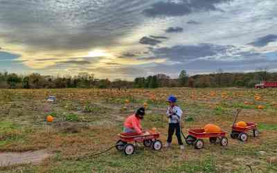 Pumpkin Picking at Enjoy Pioneer Farm in Hampshire