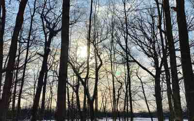 Winter hike at River Trail Nature Center