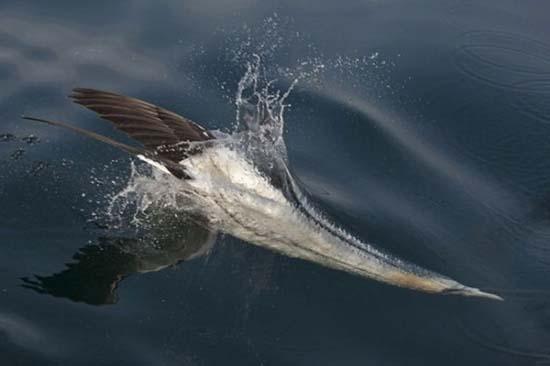 Οι κορυφαίες φωτογραφίες άγριας φύσης για το 2011 (10)
