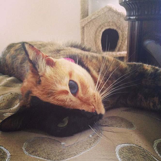 Η γάτα με την πιο μοναδική εμφάνιση στον κόσμο (13)