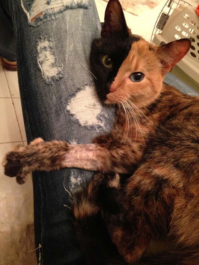 Η γάτα με την πιο μοναδική εμφάνιση στον κόσμο (21)