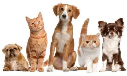 Ilhéus tem feira de adoção  de animais neste domingo