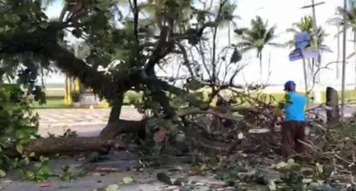 Árvores cortadas e mortes de aves: após ação do MP, Ilhéus anuncia ...