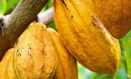 Em cinco anos, Governo da Bahia investe mais de R$ 233 milhões na agricultura