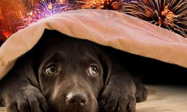 Pets e Ano Novo, como lidar com fogos de artifício