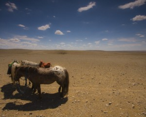 Horses rest in the sun - no water here!