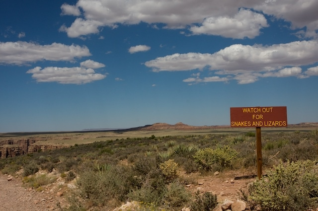 animal danger national parks