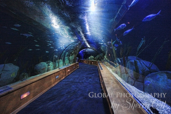 oceangraphic tunnel