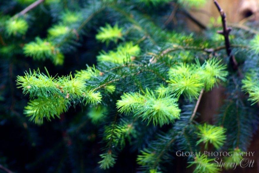 new tree growth