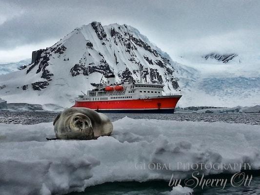 Cruising to Antarctica