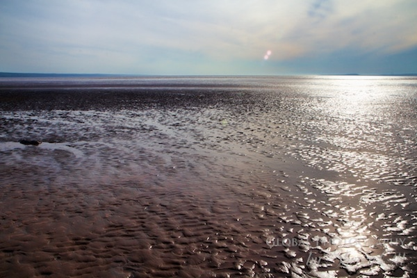 Bay of Fundy low tide
