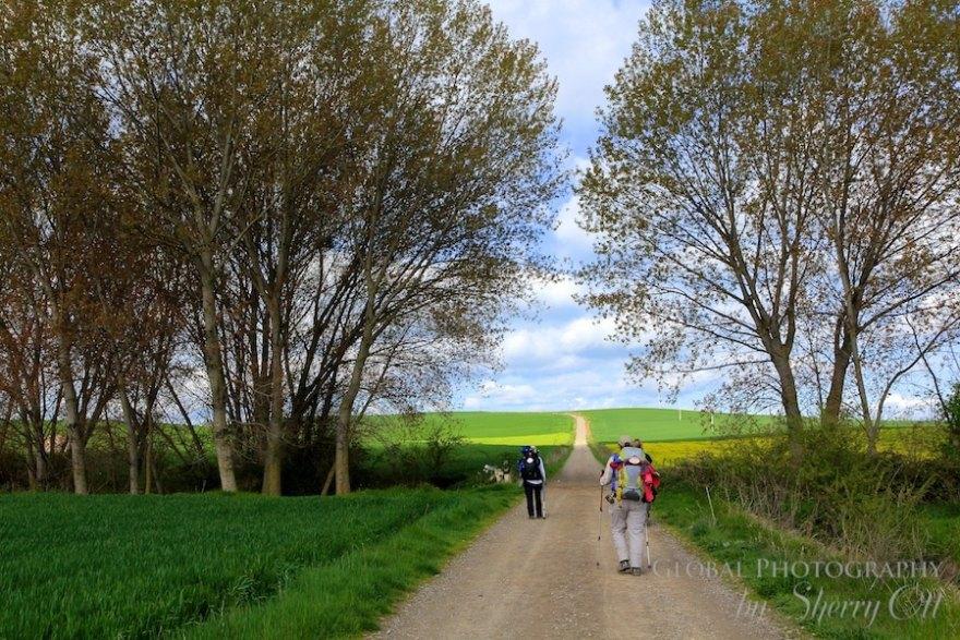 Camino de Santiago best hike in the world