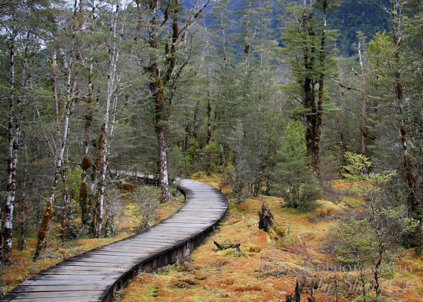 best hikes in the world Milford Trek New Zealand