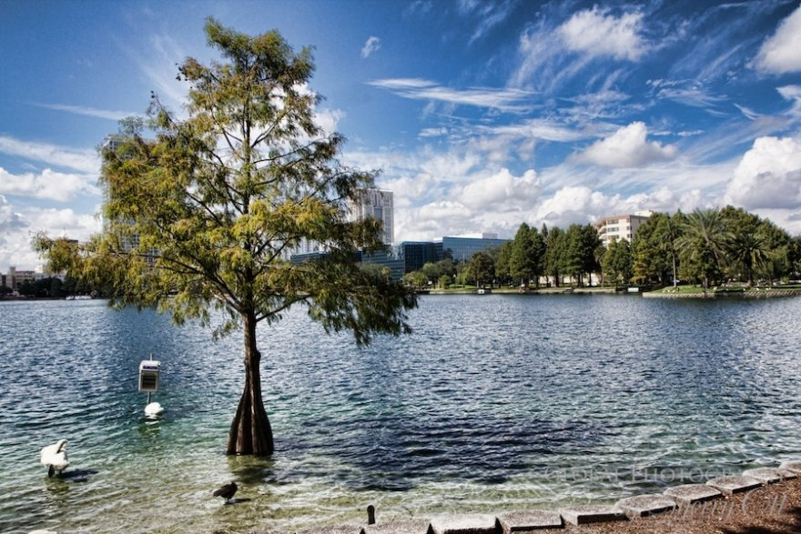 What to do in Orlando lake eola