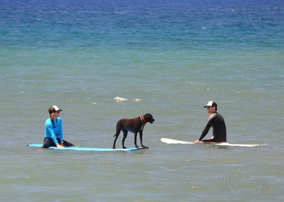 Luna surf dog maui