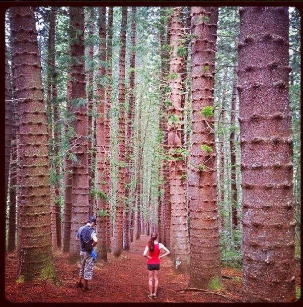 Nounou Mountain Trail Kauai