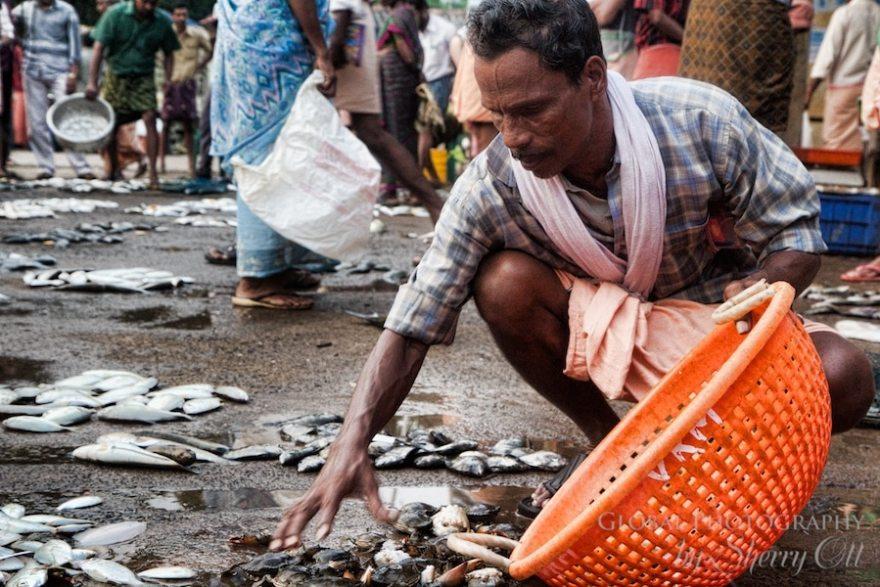 fish market india