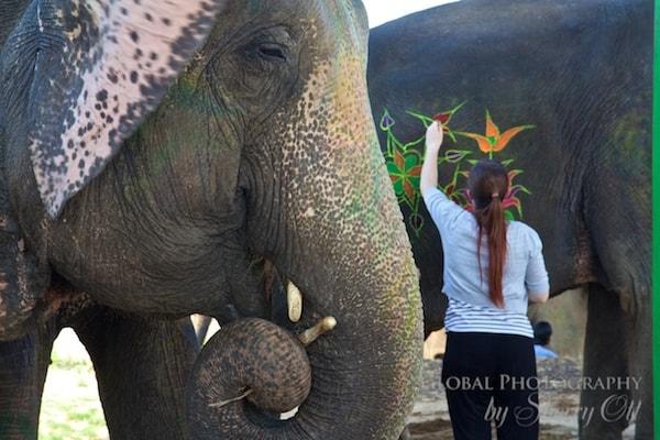 painted elephants jaipur
