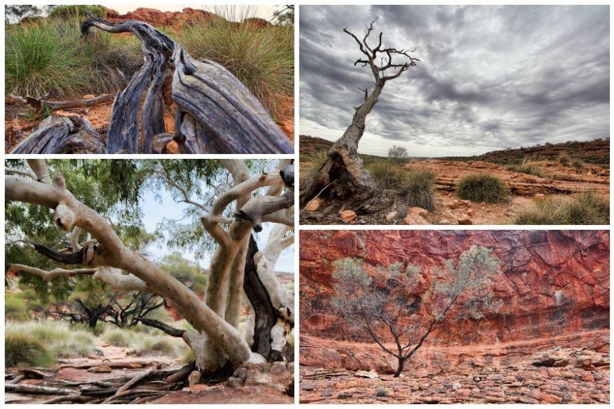 Kings Canyon Trees