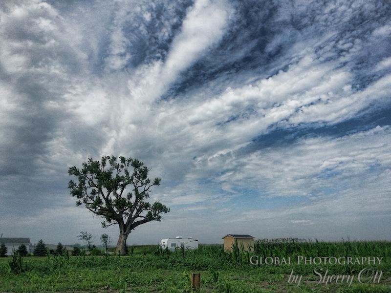 tree pilger tornado