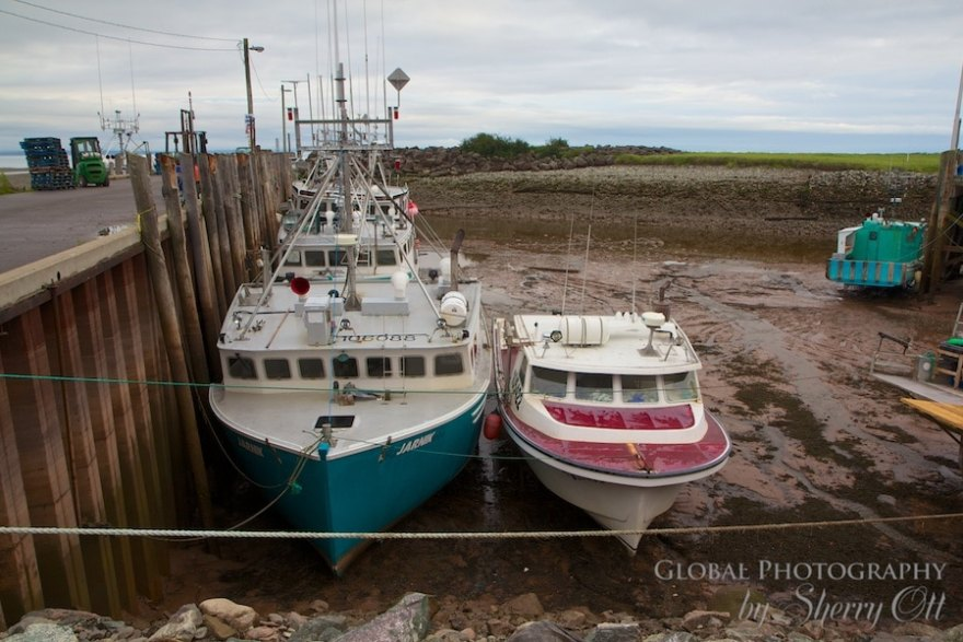 Bay of Fundy Lobster
