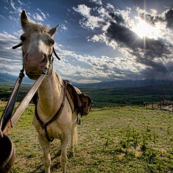 horse catalunya