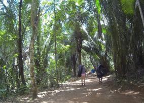 Belize Jungle Adventure