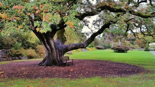 Fall Colors Ireland 1