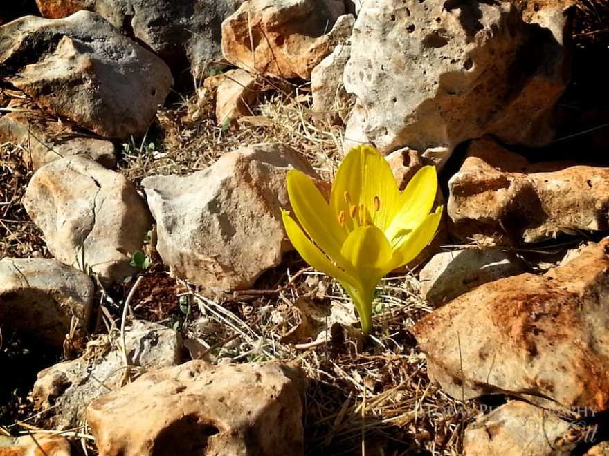 Fall Colors Lycian Way Turkey 2